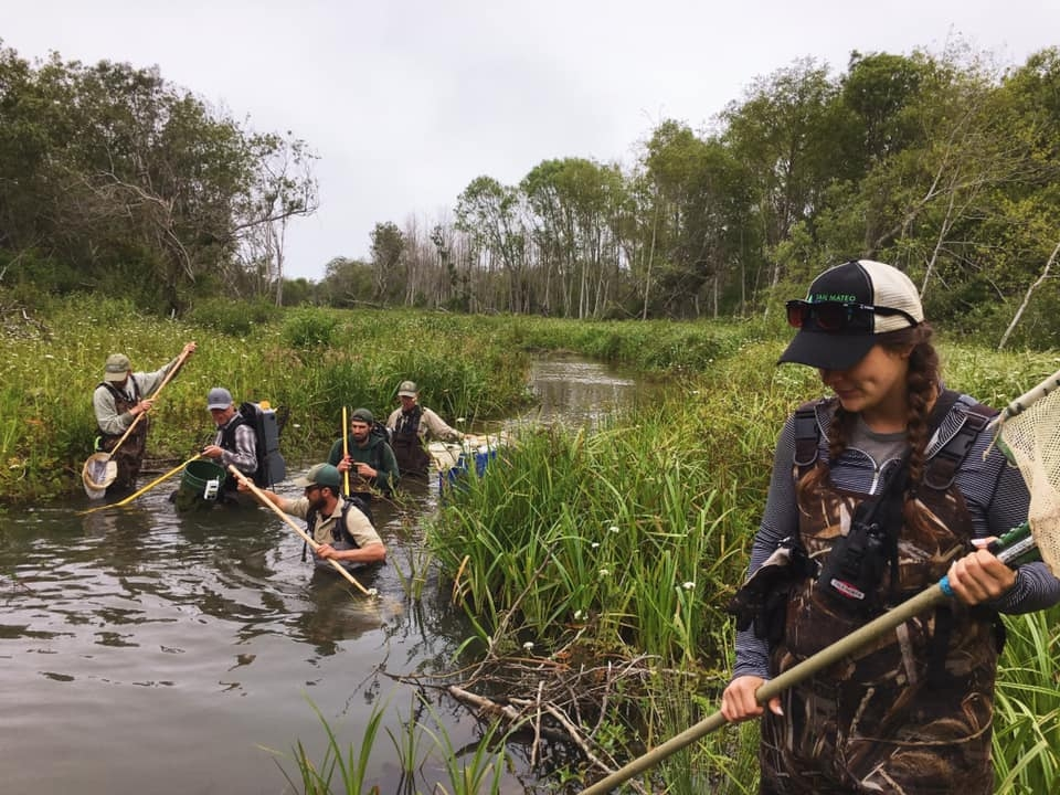 E-fishing to remove wildlife from the work area, June 2019