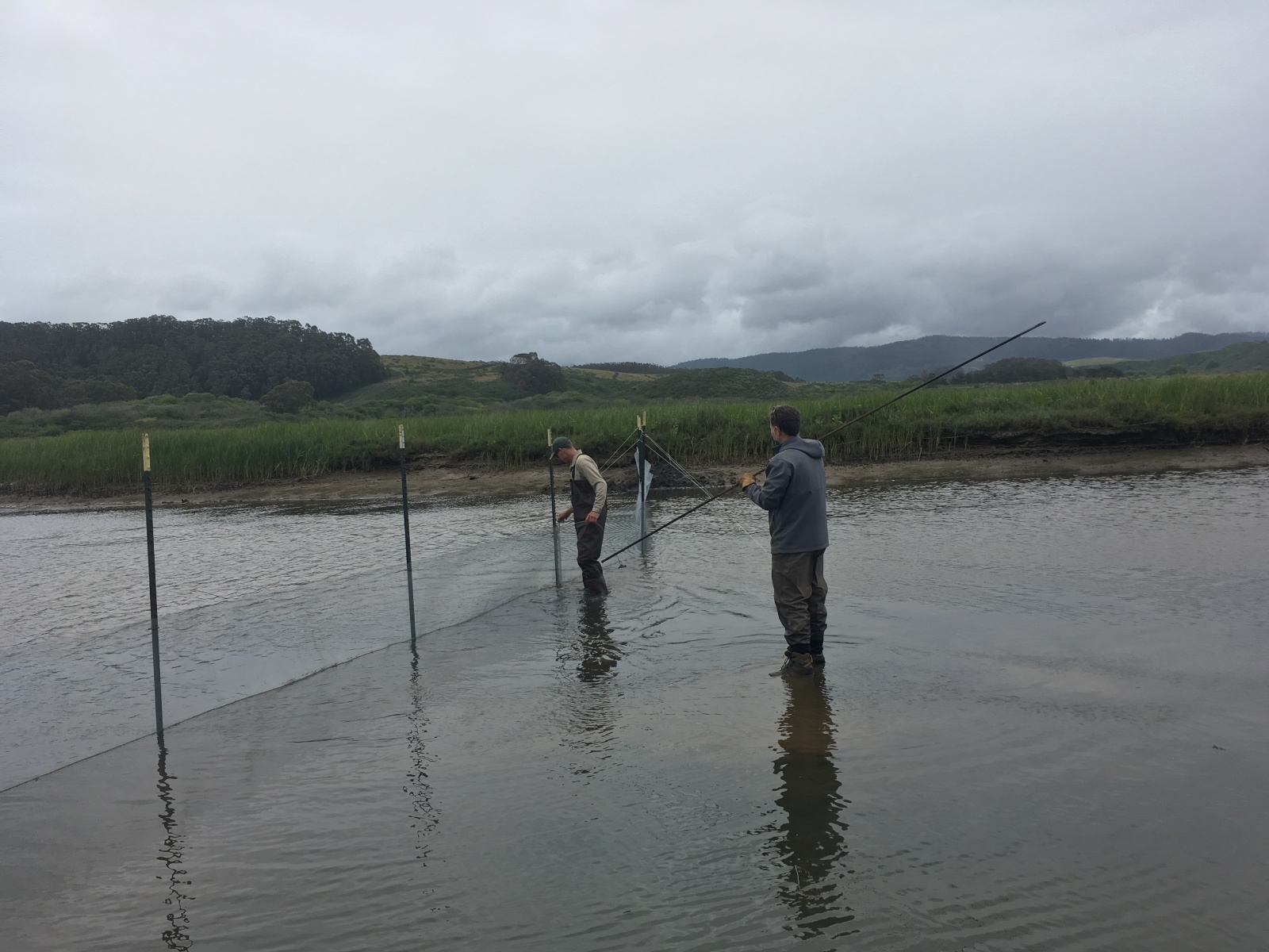 Setting up exclusion fencing to keep fish out of the work area. May 2019