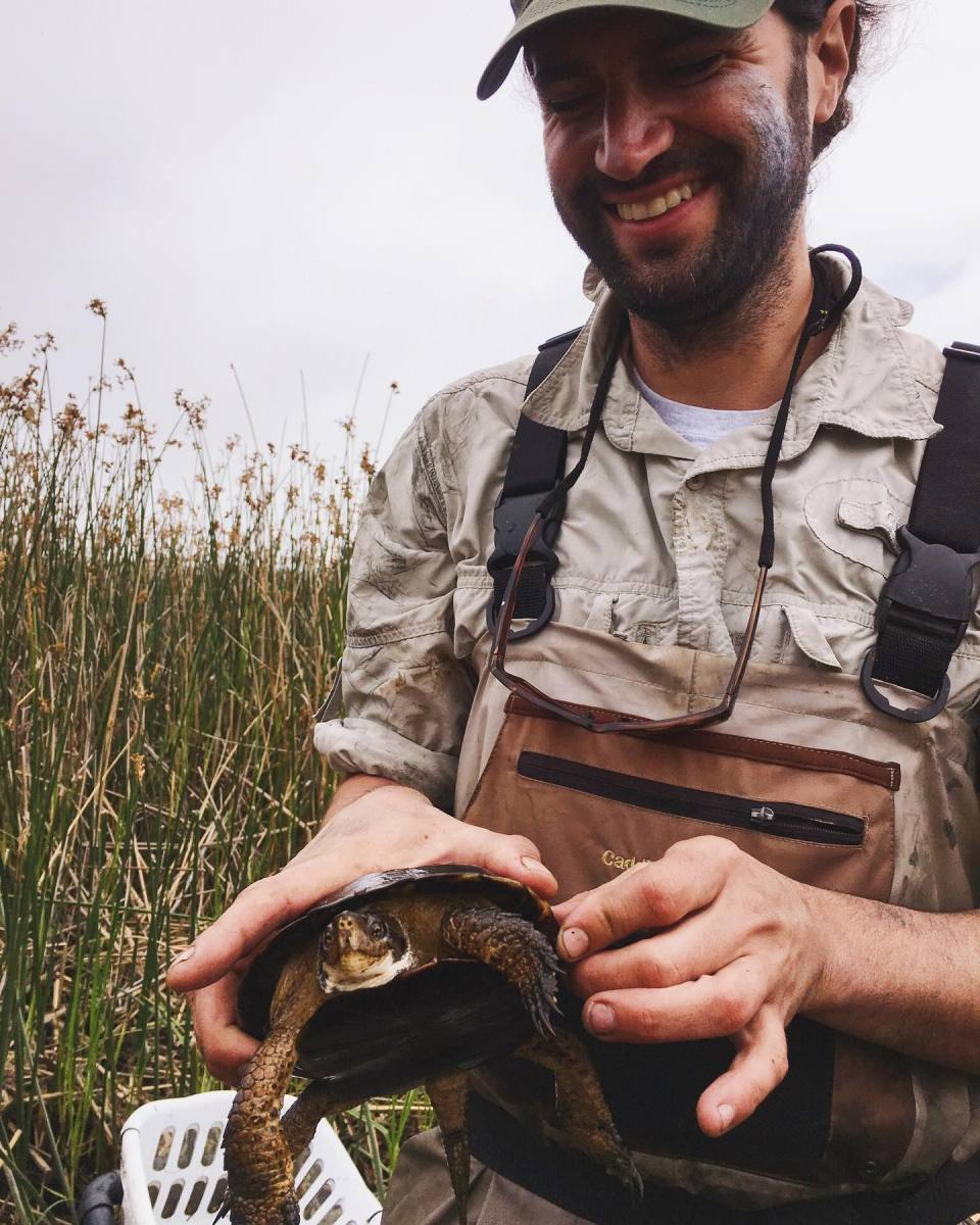 CDFW Staff Jon Jankovitz holding a western pond turtle found in Butano Marsh, June 2019