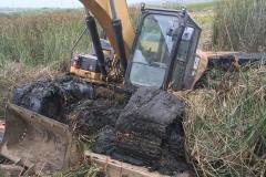 Excavator emerging from tules in Butano Marsh, July 2019