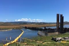 Sheet pile dam at outlet of Butano Chennel into Butano Marsh. September 2019