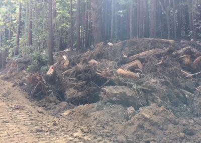 DG Week 2: Stumps pile.
