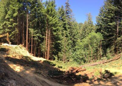 DG Week 3: Panoramic of crossing excavation.