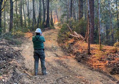 DG Week 15: CZU Fires: Fire burning toward Dark Gulch -pic2 (Wed, 8/19/2020)