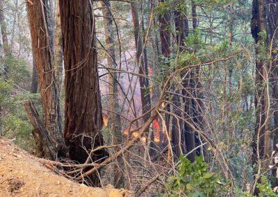 DG Week 15: CZU Fires: Fire burning toward Dark Gulch -pic3 (Wed, 8/19/2020)