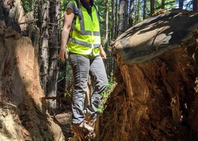 DG Week 14: Sara Polgar (RCD) and stumps dug out of crossing