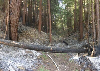 DG Week 17: Upstream of xing, showing burned area.