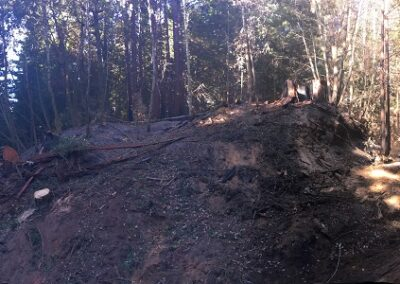 DG Week 24: Hazard tree (removed) and Old Haul Road