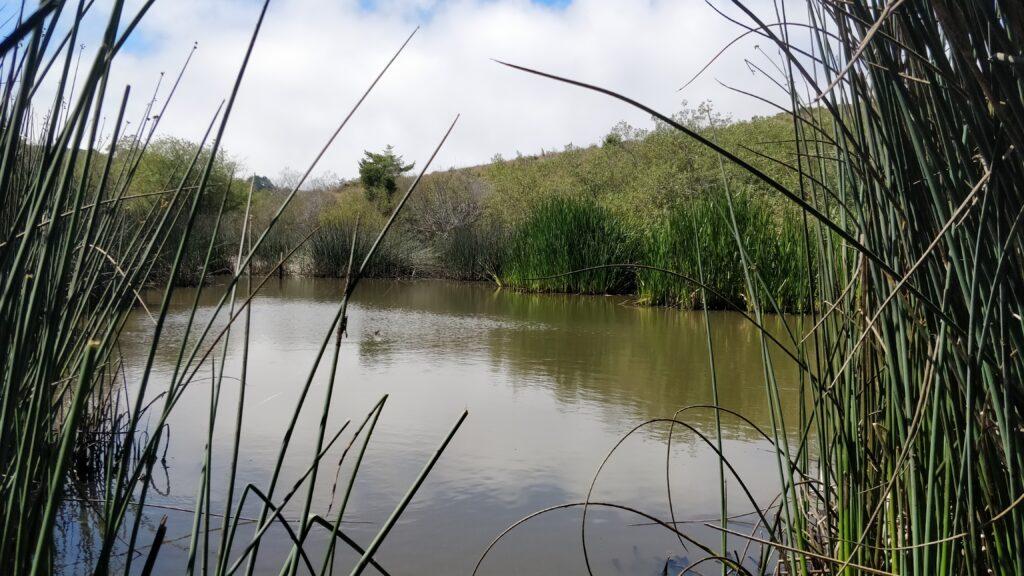 Butano Farms Pond